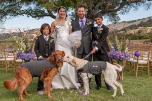Wedding couple with 2 doggies 827 by 550