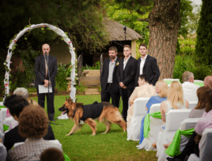 dogwedding